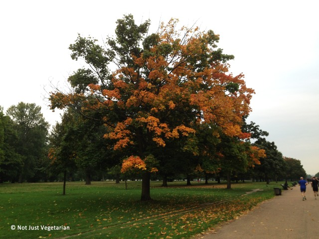 2013-10-Autumn-London (3)_NJV
